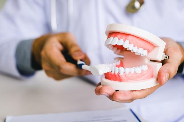 انواع دندان