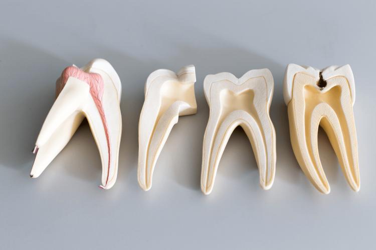 پالپ دندان